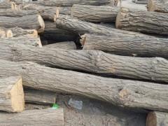 供应槐木原木