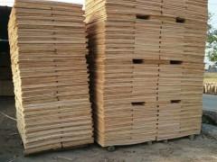 桉木板皮_桉木木皮