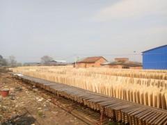 桉木板皮厂家