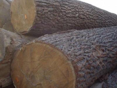 2018年01月15日鱼珠市场木材价格行情