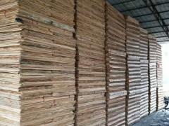 1.7桉木板皮