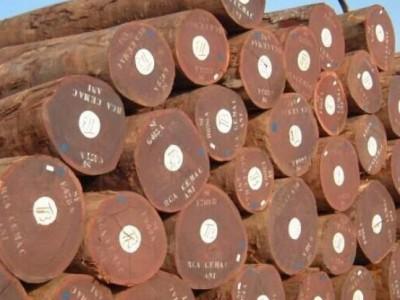 2018年01月18日鱼珠市场木材价格行情