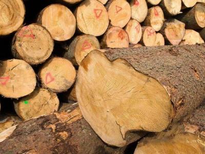 亚洲六国加大对非法木材的管控力度