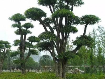 柞木和橡木?两种木材的内心泛起那熟悉的旋律:我们不一样!
