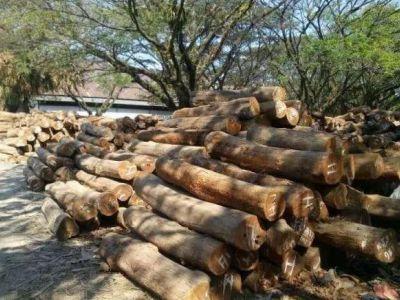 2018年,进口木材贸易面临的几大问题!「专家解答」