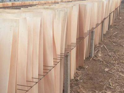 邳州市木业商会关于芯板(杨木单板,桉木单板)的质量标准和等级划分