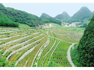 江西上饶新增2家国家林业重点龙头企业