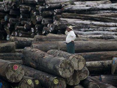 """缅甸不让再卖稀有木材了,缅甸花梨木是否能成为""""大红酸枝""""?"""