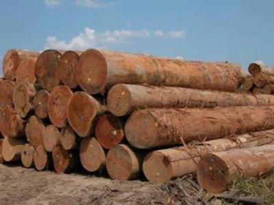 马来西亚木材行业面临挑战