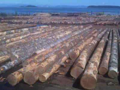 2017年宁波口岸进口木材货值同比增长55.3%