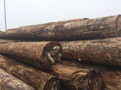 芬兰木业原木需求量增加300多万立方米
