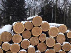 月供美国宾州纽约州进口,白蜡木,樱桃木,红橡,枫木,椴木原木