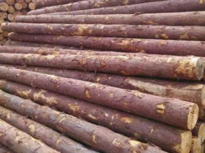 1月湖州德清口岸进口木材大幅度增长