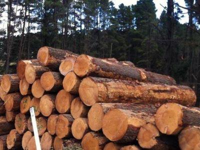 世界木材资源保护现状