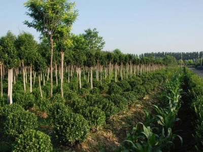 全国著名的苗木产地有哪些?
