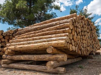 木材是什么材料