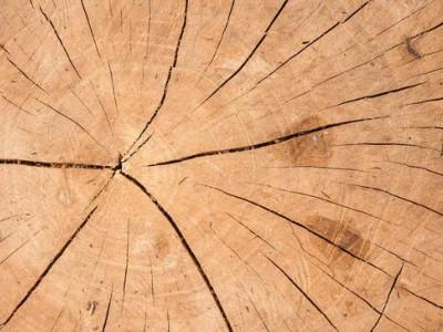 新木材暴晒为什么会炸裂