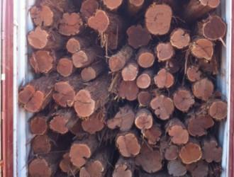 澳洲大红酸枝木Lancewood 招代理