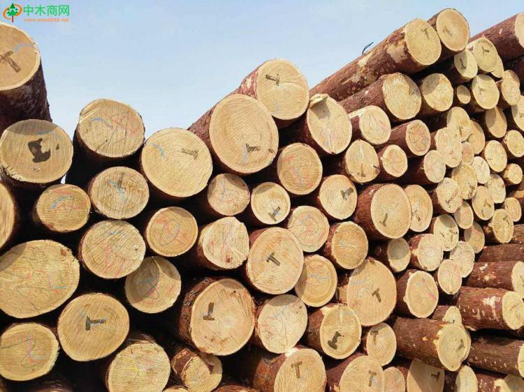 优质俄罗斯落叶松原木价格