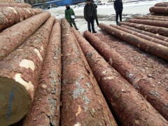 出售各种规格俄罗斯落叶松檩条小杆,打桩杆,大头杆