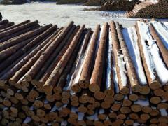 黑龙江精品落叶松原木大量供应