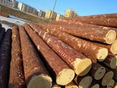 出售各种规格俄罗斯落叶松原木,量大从优