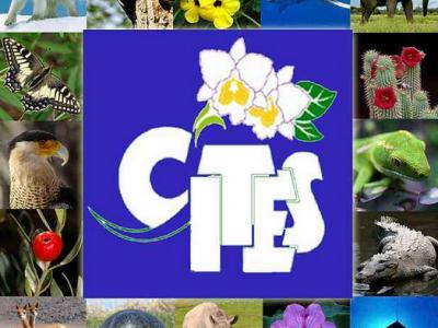 濒危野生动植物种国际贸易公约