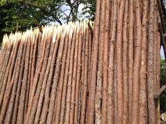 供应松木桩 松圆木 井下支撑防护木 防洪木 工地打桩木