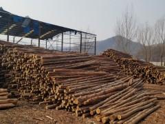 松木小杆木桩