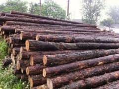 供应松木桩 松圆木 井下支撑防护木 防洪木 工地打桩木 枕木