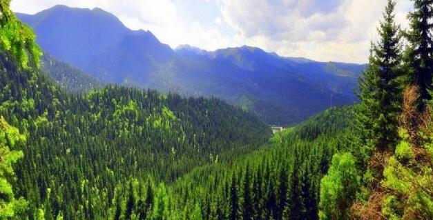 全球林業產品前景穩定, 成本抵消高價格