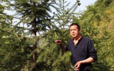 国家是否禁止种植杉树?