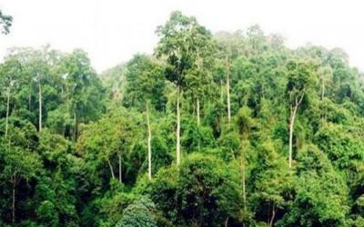 """这树一年消耗35万斤水,能长几十层楼高,被称""""植物界的活水泵"""""""