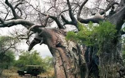 地球上最古老的生命是那些?见证了人类的整个历史