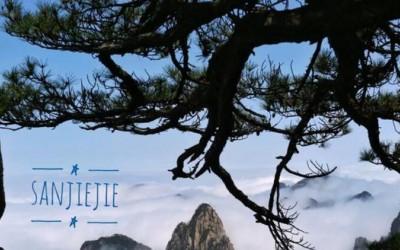安徽黄山那棵著名的迎客松还在吗?
