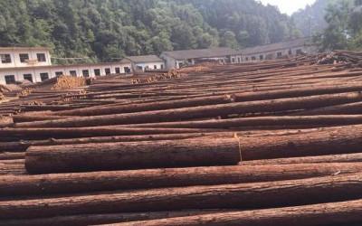 杉树木材将来市场如何?