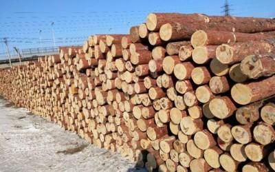 俄罗斯林业转型波及中国木材市场!内忧外患,中小企业如何应对?