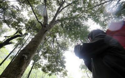 千年贡木又逢春——遂川