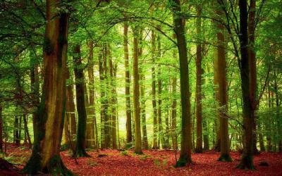 做俄材更加方便了!俄推出中文版林业领域经商须知手册,服务中资企业