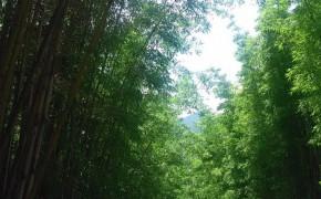 多种树木出售