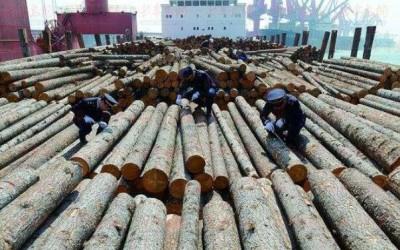 上海启动专项行动加强进口木材等有害生物防控工作