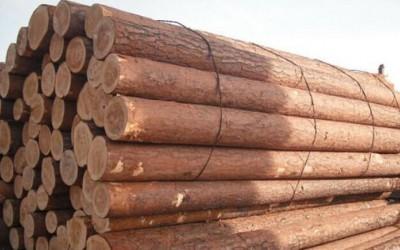什么样的木材做防腐木最好?