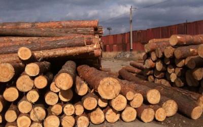 5月1日起木材进口增值税下调1%