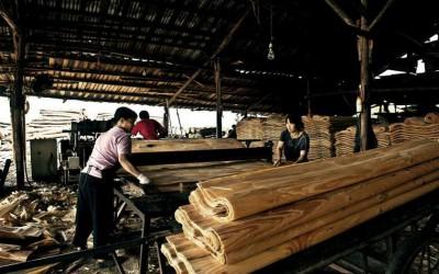 江西瑞昌人大代表视察木材加工企业