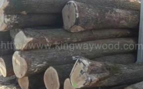 欧洲进口白橡木 橡木 原木ABC级板家具材 木材 木料