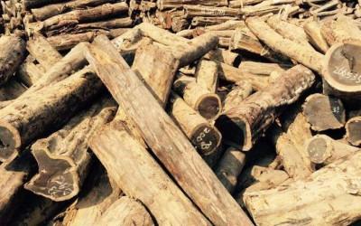 莫桑比克木材逐渐倾向半成品入市