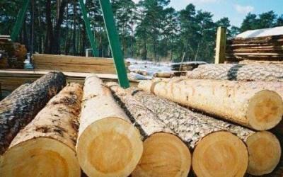 俄罗斯在远东地区椴木,水曲柳采伐量已经失控