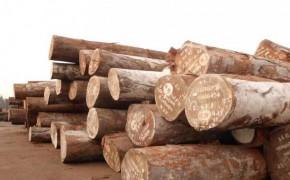 低价供应进口阿尤斯原木