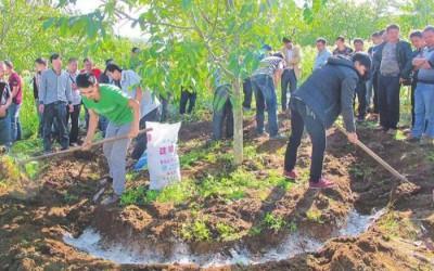 核桃树在树木上怎么放水? 喂核桃树什么化肥好?