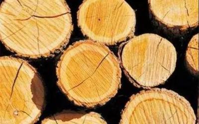木材干燥新技术层出不穷,传统窑干仍是尚佳之选!